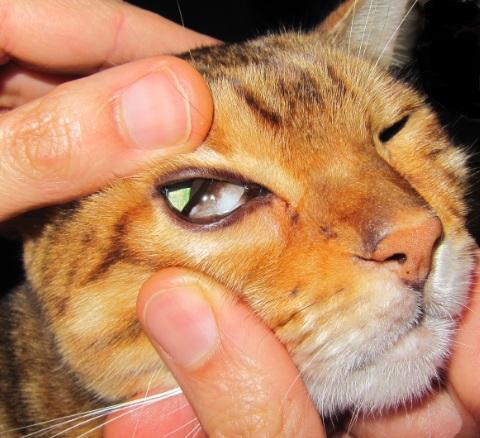 Pancreatitis for What fish has eyelids