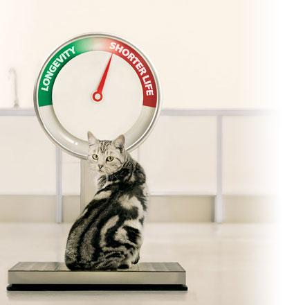 13 Vitamin Agar Kucing Cepat Gemuk