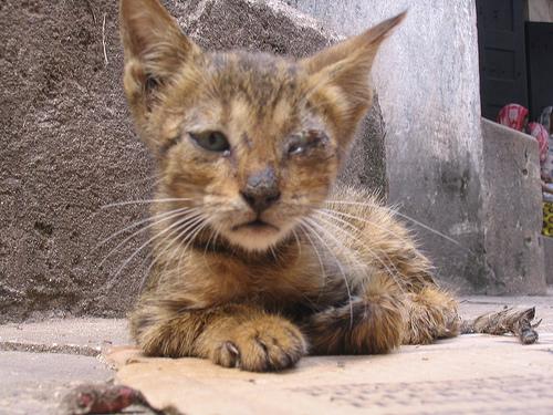 cat command unix