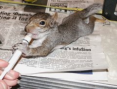 Do Not Grab A Squirrel By The Tail As Will Come Off And Does Grow Back