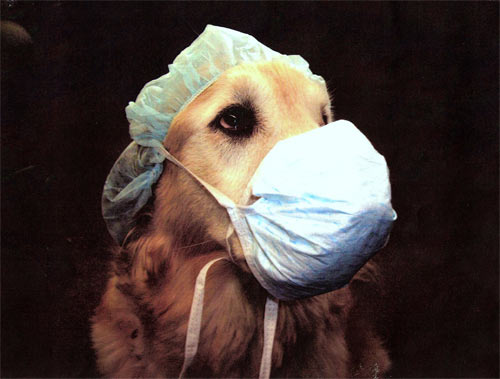 brucellosis rabies etc If a zoonotic disease, such as rabies,  anthrax, brucellosis, leptospirosis, etc histopathology:sections of most tissues should be no thicker than 1/4 inch.
